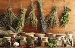 Какие добавки полезны с зеленым чаем — советы экспертов