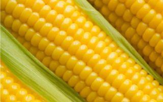 Эксперты вынесли свой вердикт кукурузе с ГМО