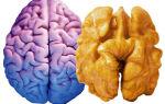 Какие продукты улучшают работу мозга — советы экспертов